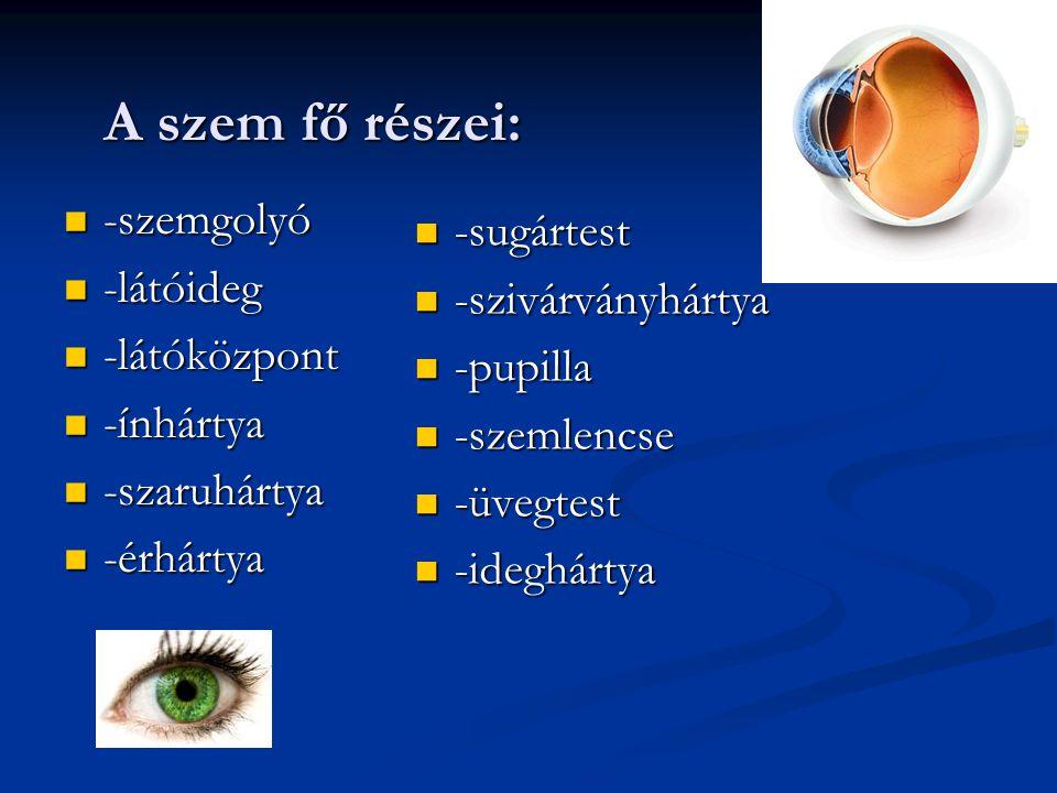 A szem fő részei:  -szemgolyó  -látóideg  -látóközpont  -ínhártya  -szaruhártya  -érhártya  -sugártest  -szivárványhártya  -pupilla  -szemle