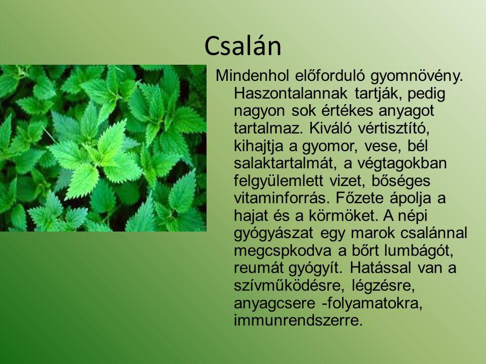 Csalán Mindenhol előforduló gyomnövény. Haszontalannak tartják, pedig nagyon sok értékes anyagot tartalmaz. Kiváló vértisztító, kihajtja a gyomor, ves