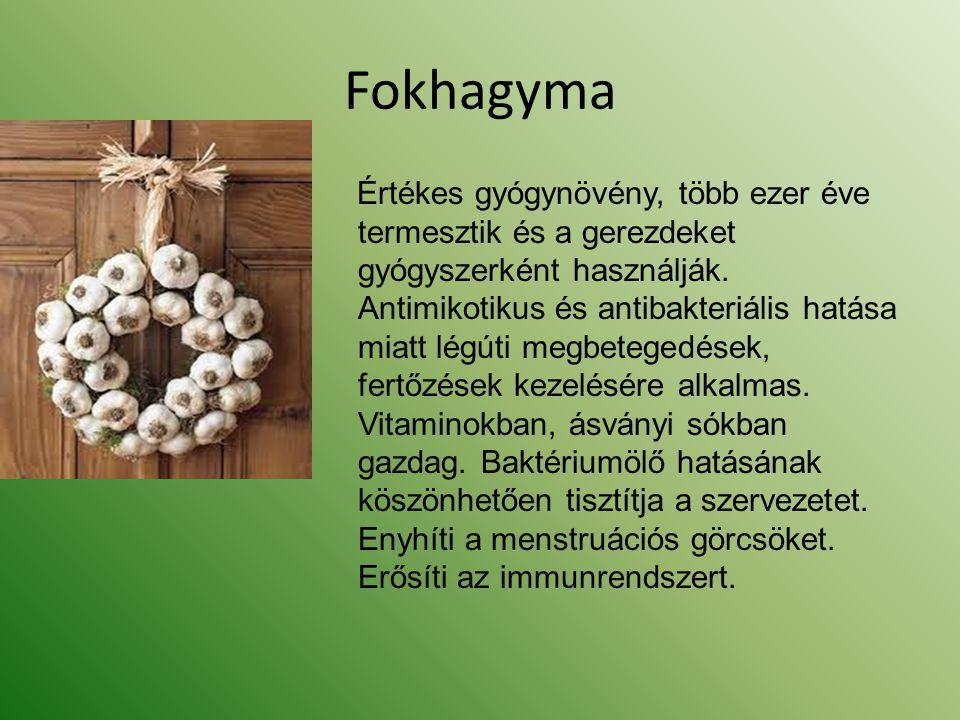 Fokhagyma Értékes gyógynövény, több ezer éve termesztik és a gerezdeket gyógyszerként használják. Antimikotikus és antibakteriális hatása miatt légúti