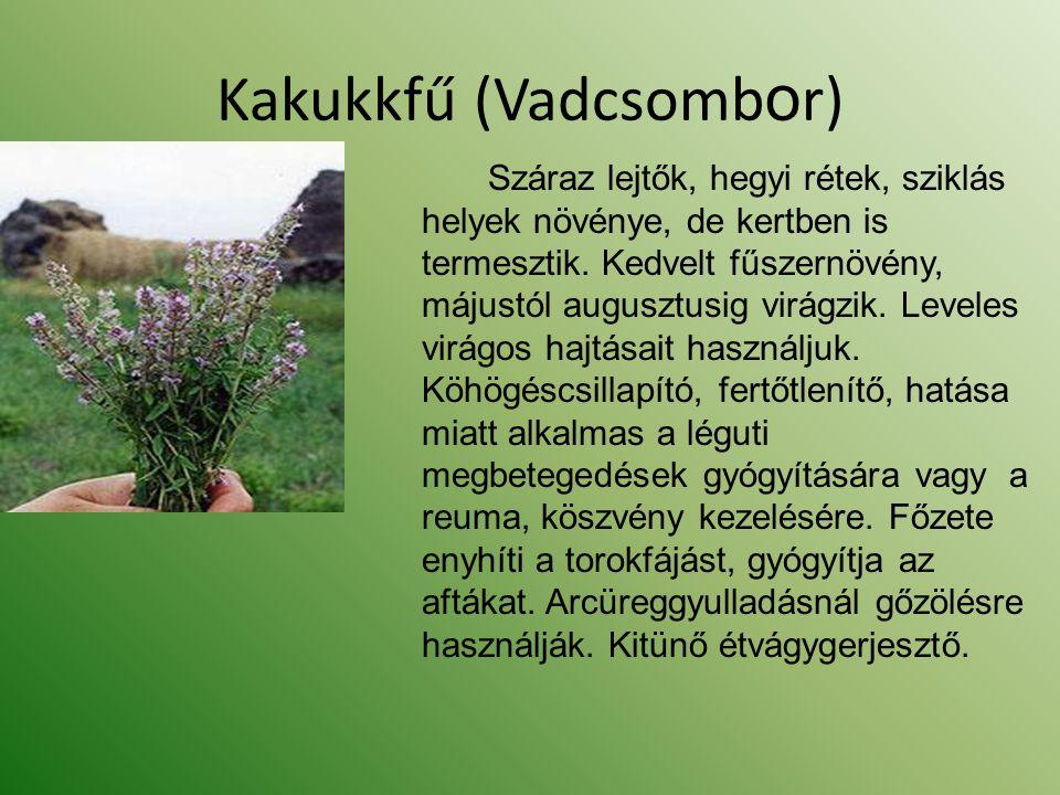 Kakukkfű (Vadcsomb o r) Száraz lejtők, hegyi rétek, sziklás helyek növénye, de kertben is termesztik. Kedvelt fűszernövény, májustól augusztusig virág