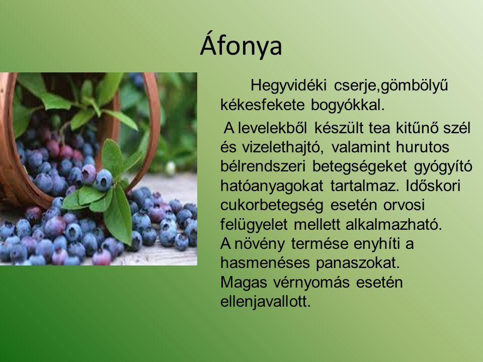 Áfonya Hegyvidéki cserje,gömbölyű kékesfekete bogyókkal. A levelekből készült tea kitűnő szél és vizelethajtó, valamint hurutos bélrendszeri betegsége