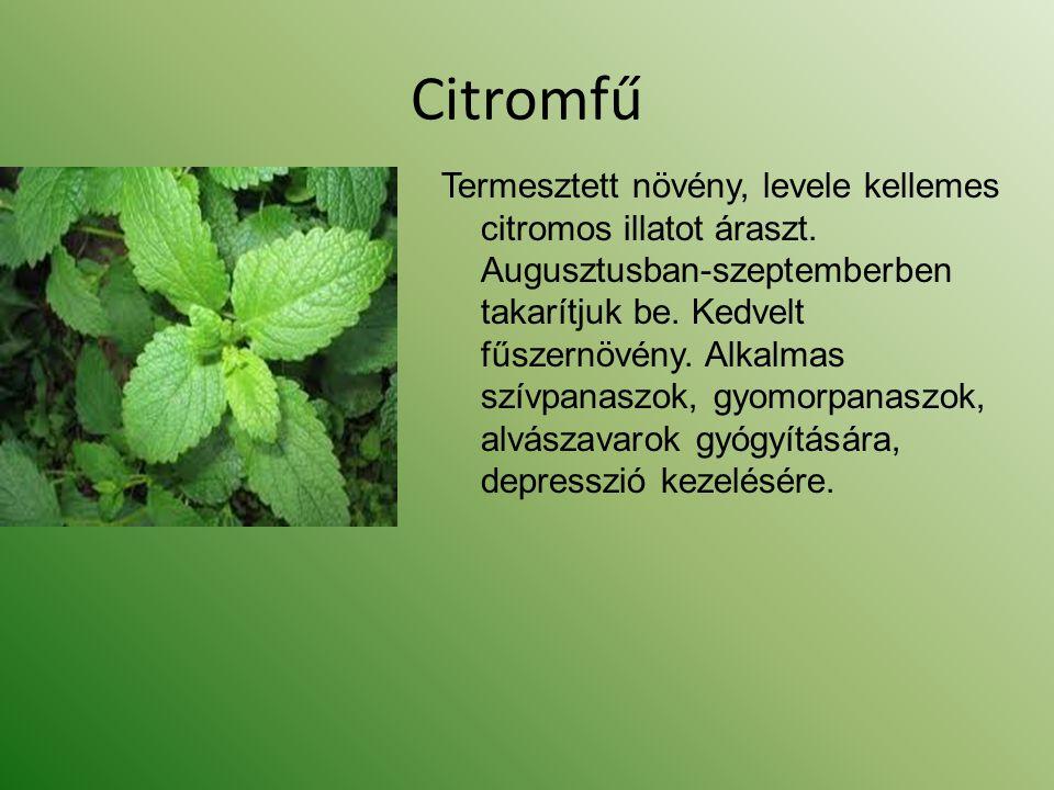 Citromfű Termesztett növény, levele kellemes citromos illatot áraszt. Augusztusban-szeptemberben takarítjuk be. Kedvelt fűszernövény. Alkalmas szívpan