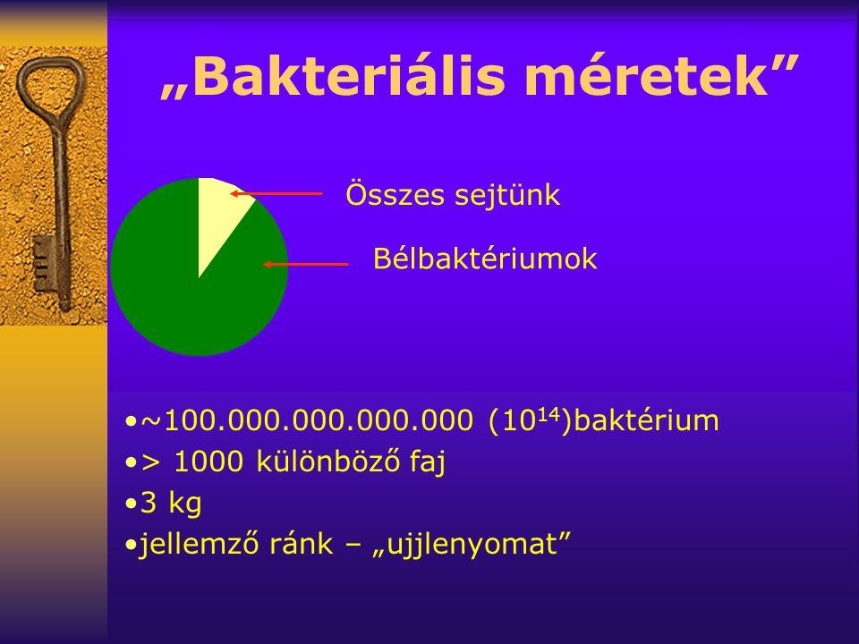 """""""Bakteriális méretek Bélbaktériumok Összes sejtünk •~100.000.000.000.000 (10 14 )baktérium •> 1000 különböző faj •3 kg •jellemző ránk – """"ujjlenyomat"""