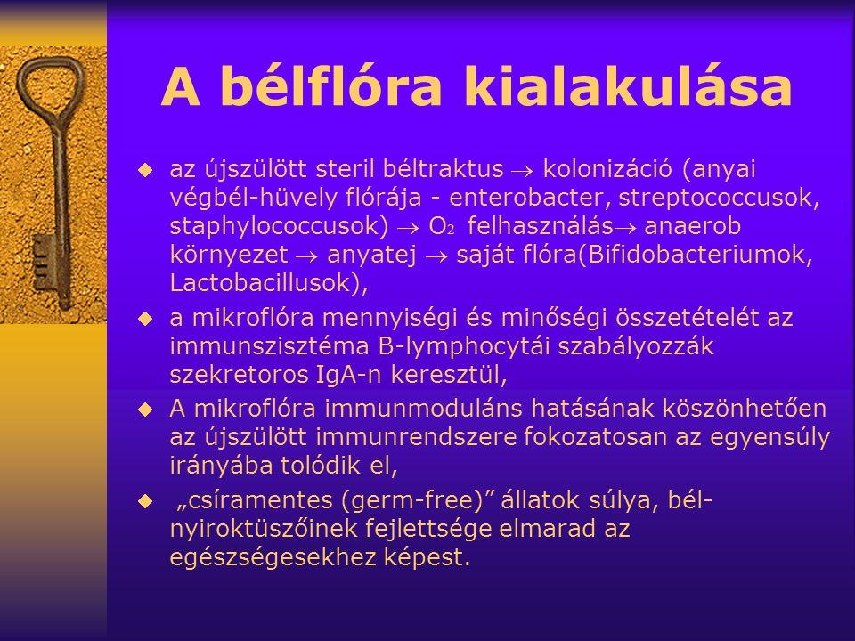 """A bélflóra kialakulása  az újszülött steril béltraktus  kolonizáció (anyai végbél-hüvely flórája - enterobacter, streptococcusok, staphylococcusok)  O  felhasználás anaerob környezet  anyatej  saját flóra(Bifidobacteriumok, Lactobacillusok),  a mikroflóra mennyiségi és minőségi összetételét az immunszisztéma B-lymphocytái szabályozzák szekretoros IgA-n keresztül,  A mikroflóra immunmoduláns hatásának köszönhetően az újszülött immunrendszere fokozatosan az egyensúly irányába tolódik el,  """"csíramentes (germ-free) állatok súlya, bél- nyiroktüszőinek fejlettsége elmarad az egészségesekhez képest."""
