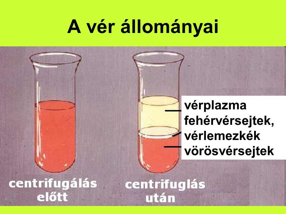 A vér állományai vérplazma fehérvérsejtek, vérlemezkék vörösvérsejtek