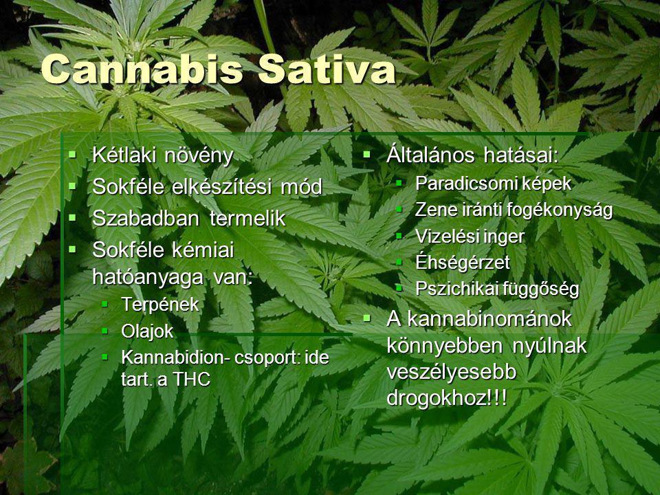 Cannabis Sativa  Kétlaki növény  Sokféle elkészítési mód  Szabadban termelik  Sokféle kémiai hatóanyaga van:  Terpének  Olajok  Kannabidion- cs