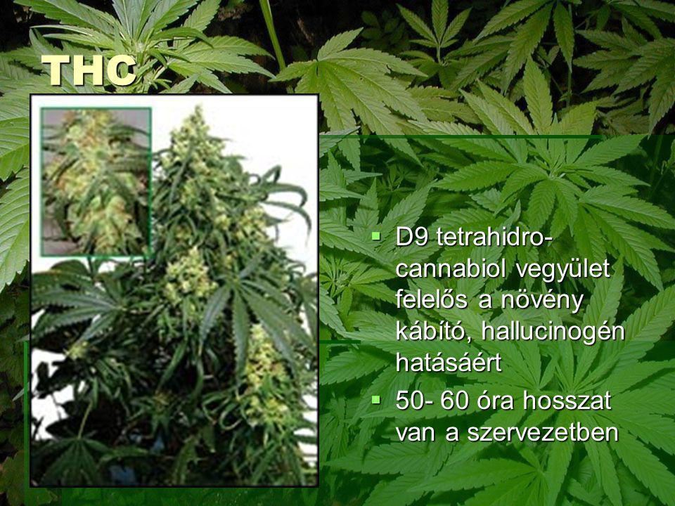 THC  D9 tetrahidro- cannabiol vegyület felelős a növény kábító, hallucinogén hatásáért  50- 60 óra hosszat van a szervezetben