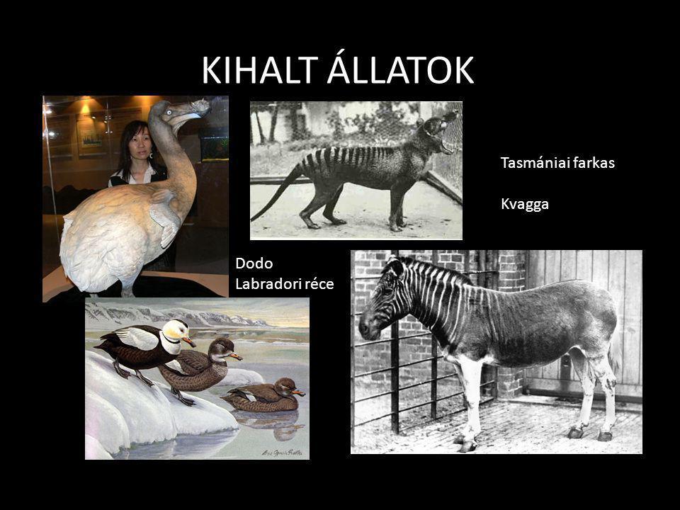 VÁDIRAT vád 4 – állatfajok kipusztítása Kipusztult emlősök • Kaszpi tigris – Kaszpi-tenger környéke 1970-es évek – vadászat • Jávai tigris– Jáva, Indo