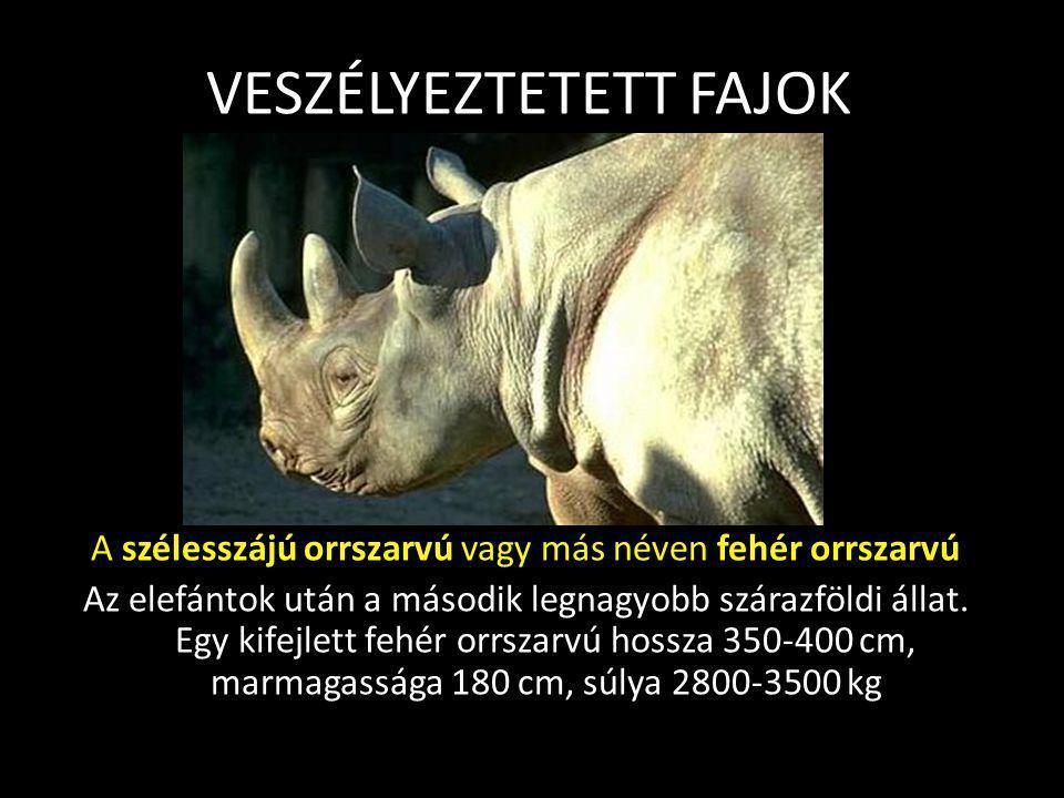 VÁDIRAT vád 4 – állatfajok kipusztítása Veszélyeztetett fajok: A veszélyeztetett állatfajok száma 1996-tól 5205-ről 7266-ra ugrott! Kihaló Ez a vadon