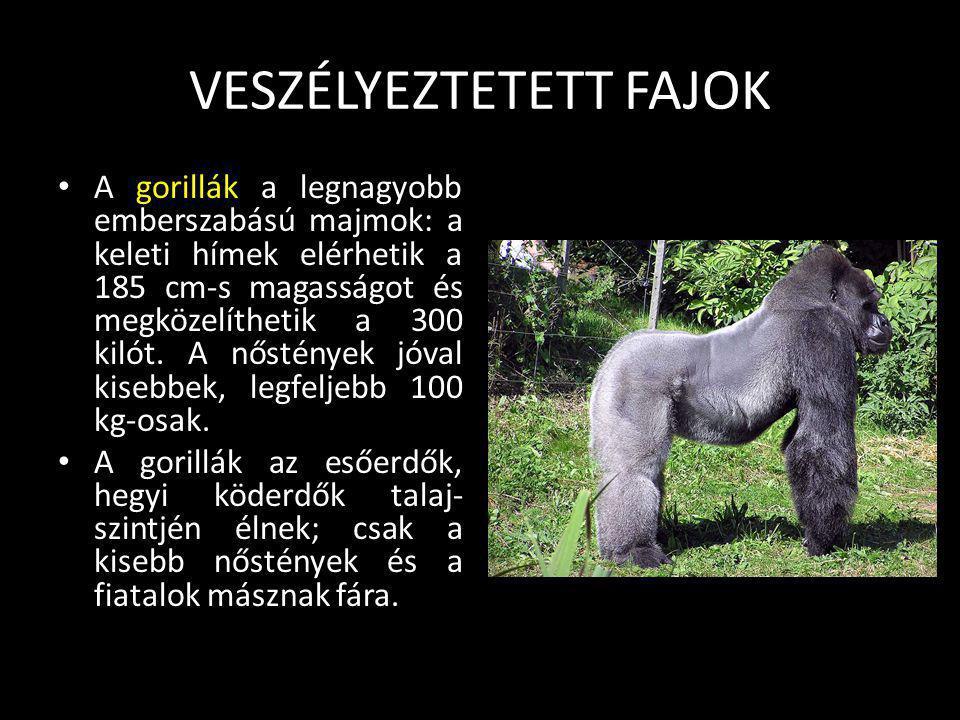 VESZÉLYEZTETETT FAJOK A szélesszájú orrszarvú vagy más néven fehér orrszarvú Az elefántok után a második legnagyobb szárazföldi állat. Egy kifejlett f