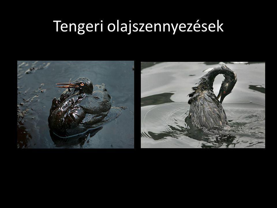 BŰNÖK 2 BÁLNÁK TÖMEGES LEGYILKOLÁSA A ZSÍRJUKÉRT