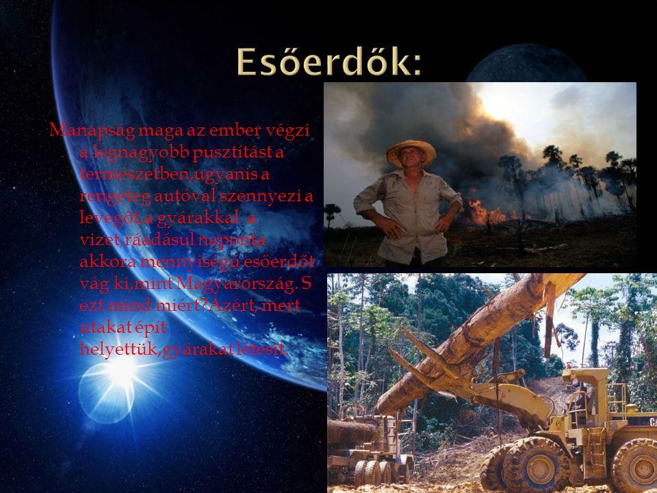 Manapság maga az ember végzi a legnagyobb pusztítást a természetben,ugyanis a rengeteg autóval szennyezi a levegőt,a gyárakkal a vizet,ráadásul naponta akkora mennyiségű esőerdőt vág ki,mint Magyarország.