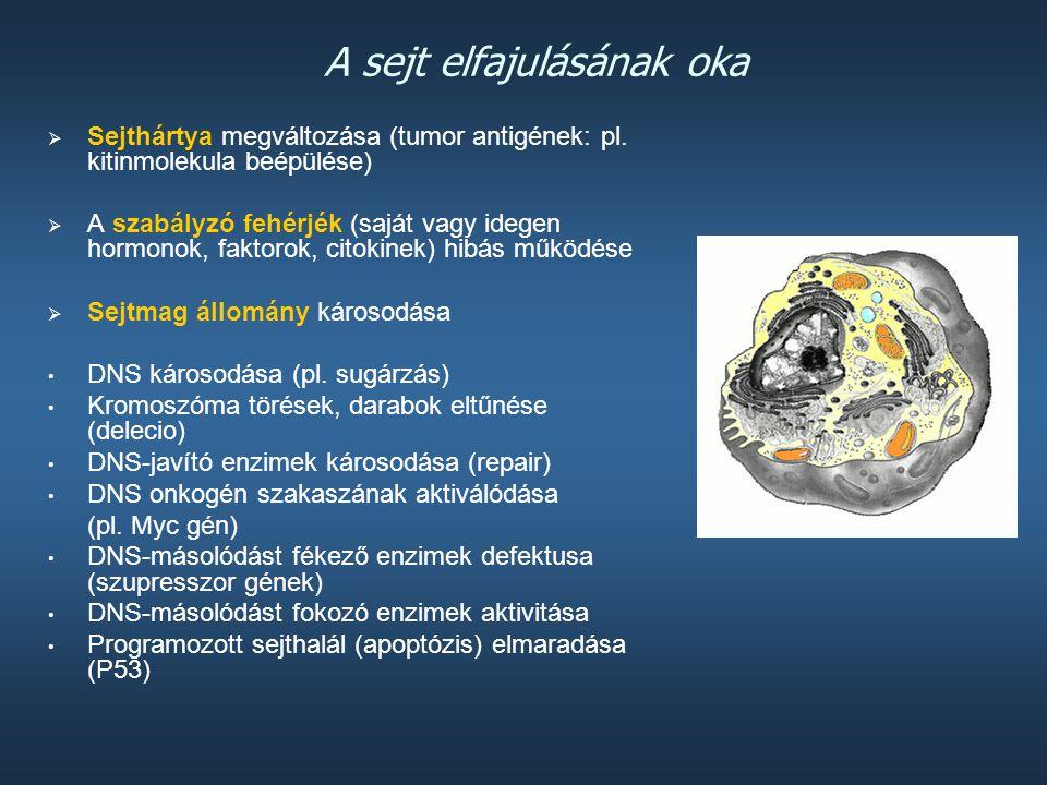 Genetikai faktorok  Az átalakulás (transzformáció) kapcsán a sejtreguláció megbomlik, és új tulajdonságok jelennek meg a mutációk révén, ami a dagana