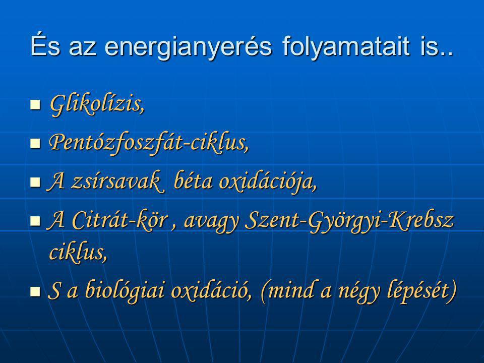 És az energianyerés folyamatait is..  Glikolízis,  Pentózfoszfát-ciklus,  A zsírsavak béta oxidációja,  A Citrát-kör, avagy Szent-Györgyi-Krebsz c