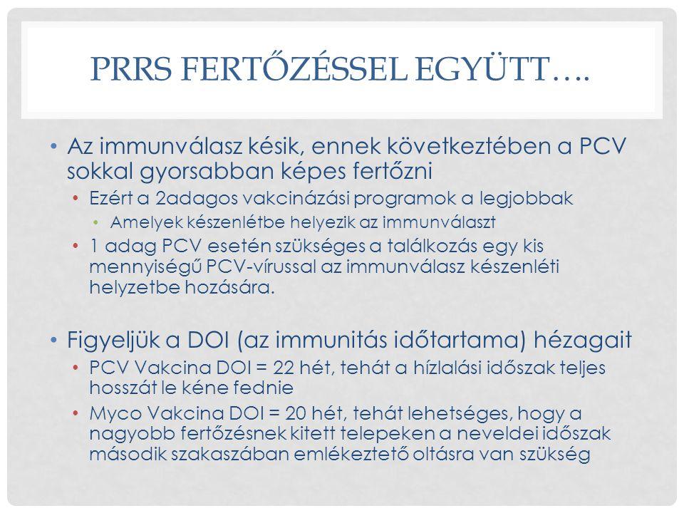 PRRS FERTŐZÉSSEL EGYÜTT…. • Az immunválasz késik, ennek következtében a PCV sokkal gyorsabban képes fertőzni • Ezért a 2adagos vakcinázási programok a