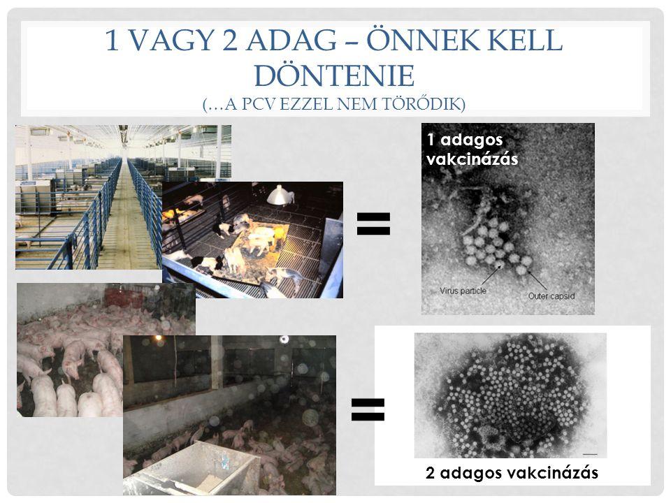 1 VAGY 2 ADAG – ÖNNEK KELL DÖNTENIE (…A PCV EZZEL NEM TÖRŐDIK) = = 1 adagos vakcinázás 2 adagos vakcinázás