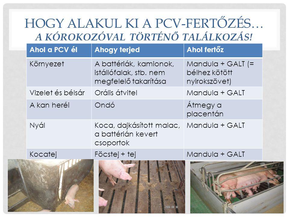 A PCV-FERTŐZÉS ÖSSZEFOGLALÁSA Paraméter A PCV2 megbetegedési folyamat lépései 1: Találkozás a vírussal 2: A fertőzés kezdete 3: A fertőzés kitörése4: Megnyugvás Mikor 0.