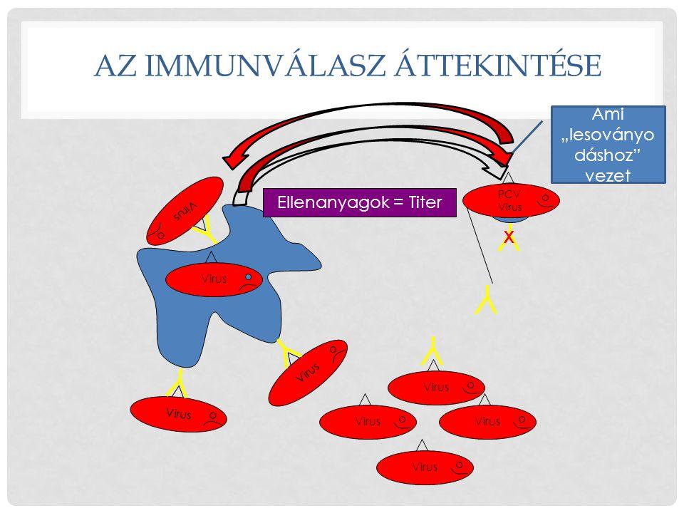 """Neutrophil AZ IMMUNVÁLASZ ÁTTEKINTÉSE Virus B Cell Virus Ellenanyagok = Titer Virus Ami """"lesoványo dáshoz"""" vezet PCV Virus X"""