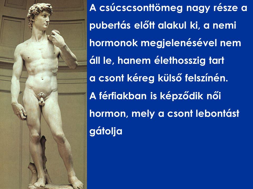 A csúcscsonttömeg nagy része a pubertás előtt alakul ki, a nemi hormonok megjelenésével nem áll le, hanem élethosszig tart a csont kéreg külső felszínén.