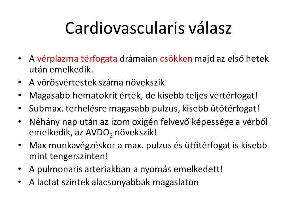 Cardiovascularis válasz • A vérplazma térfogata drámaian csökken majd az első hetek után emelkedik.
