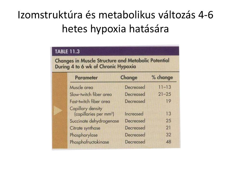 Izomstruktúra és metabolikus változás 4-6 hetes hypoxia hatására