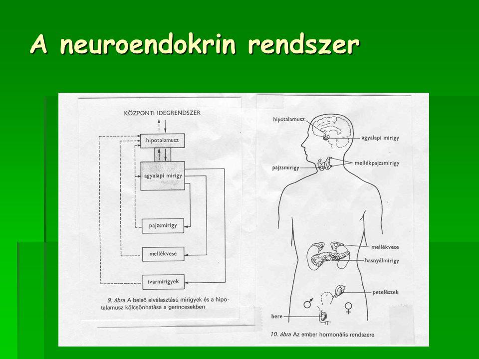 A neuroendokrin rendszer