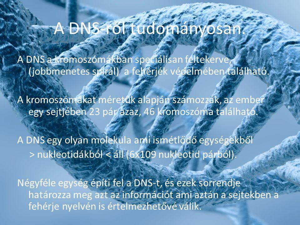 A DNS-ről tudományosan. A DNS a kromoszómákban speciálisan feltekerve, (jobbmenetes spirál) a fehérjék védelmében található. A kromoszómákat méretük a