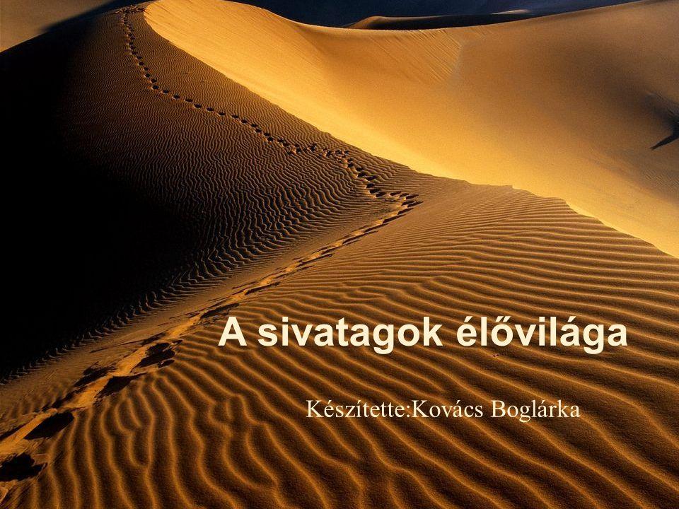 A sivatagok élővilága Készítette:Kovács Boglárka