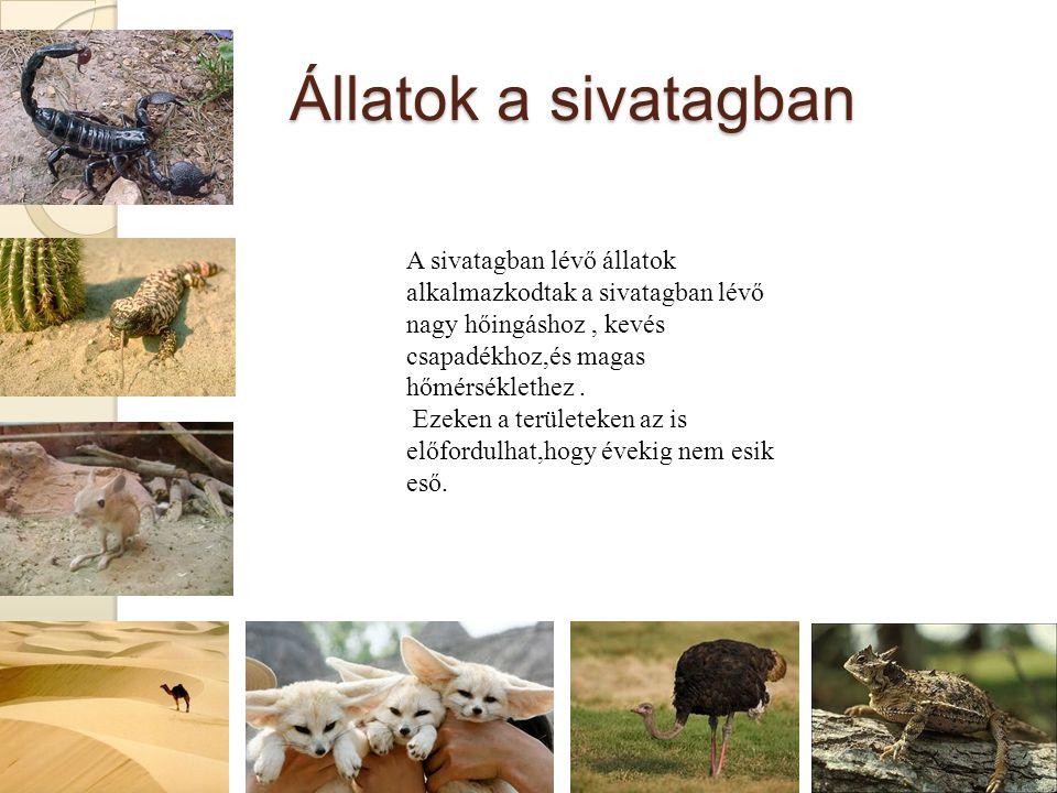 Állatok a sivatagban A sivatagban lévő állatok alkalmazkodtak a sivatagban lévő nagy hőingáshoz, kevés csapadékhoz,és magas hőmérséklethez.