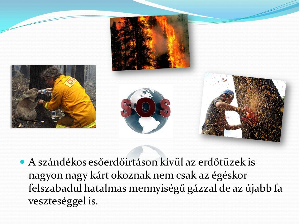  A szándékos esőerdőirtáson kívül az erdőtüzek is nagyon nagy kárt okoznak nem csak az égéskor felszabadul hatalmas mennyiségű gázzal de az újabb fa veszteséggel is.
