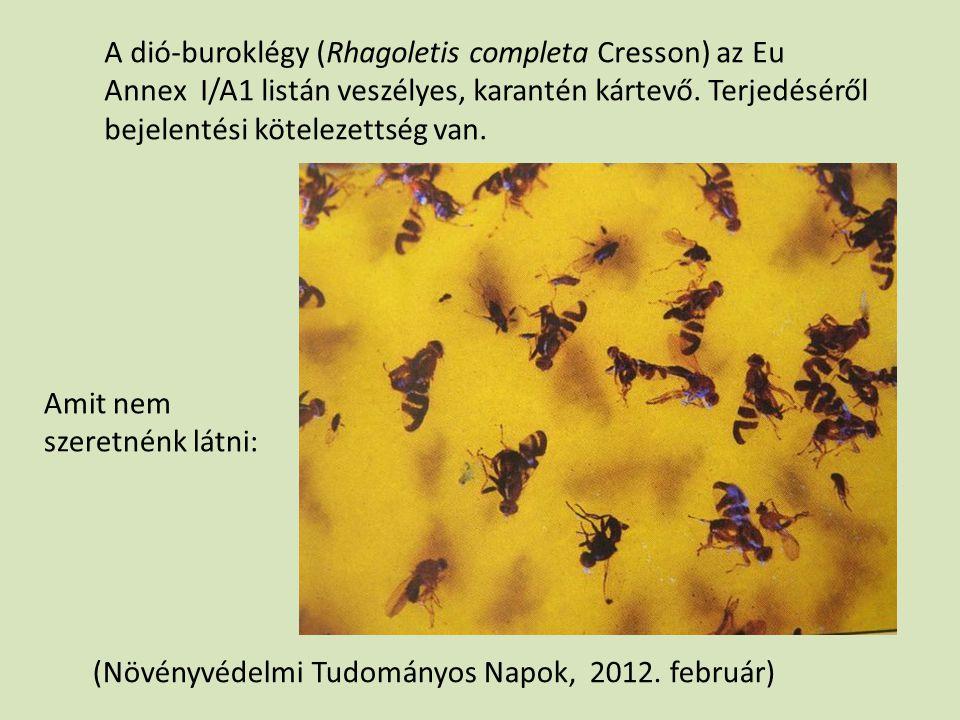 Amit nem szeretnénk látni: (Növényvédelmi Tudományos Napok, 2012. február) A dió-buroklégy (Rhagoletis completa Cresson) az Eu Annex I/A1 listán veszé