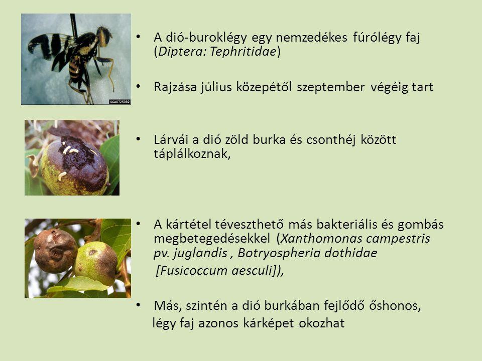 • A dió-buroklégy egy nemzedékes fúrólégy faj (Diptera: Tephritidae) • Rajzása július közepétől szeptember végéig tart • Lárvái a dió zöld burka és cs