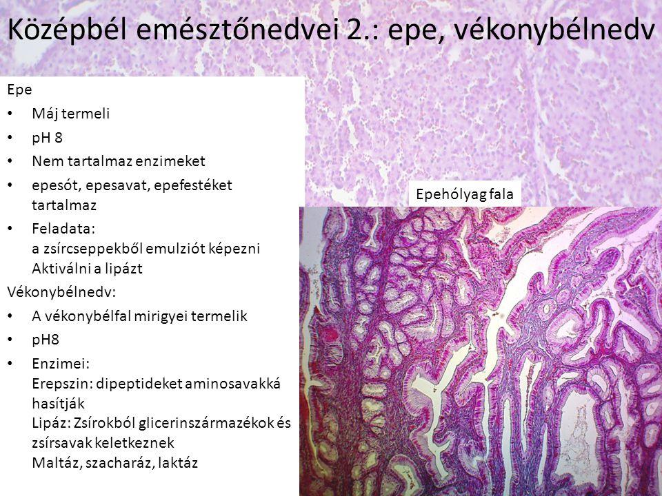 Epe • Máj termeli • pH 8 • Nem tartalmaz enzimeket • epesót, epesavat, epefestéket tartalmaz • Feladata: a zsírcseppekből emulziót képezni Aktiválni a