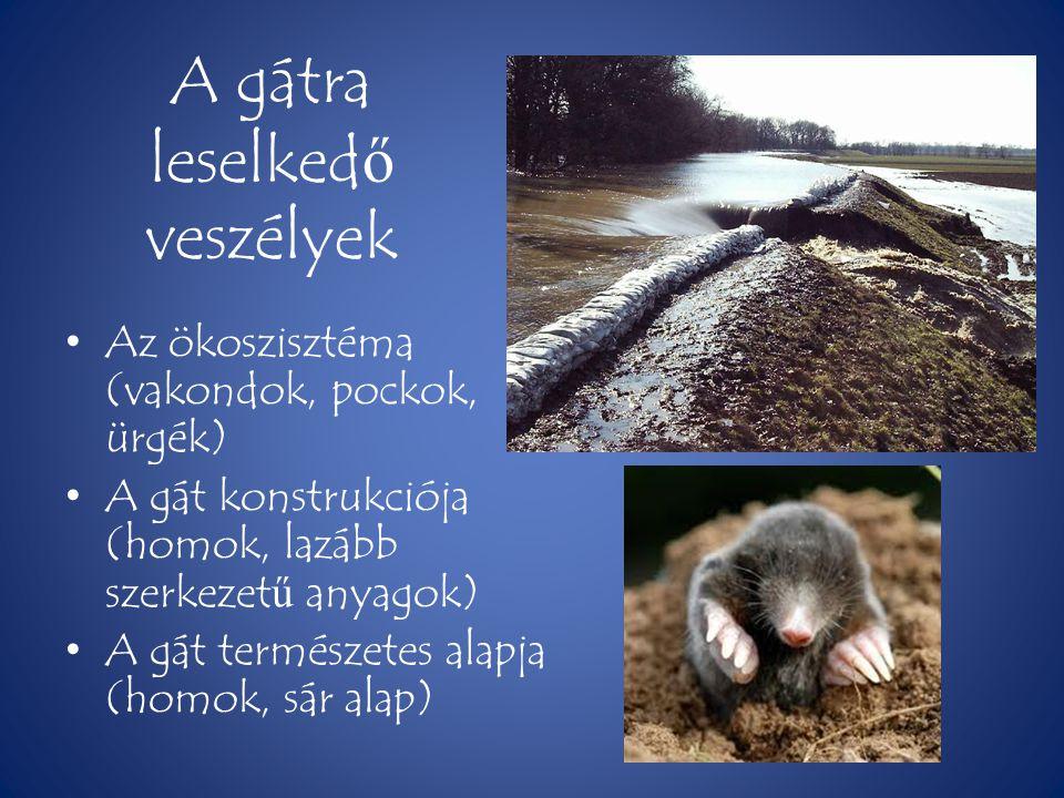 A gátra leselked ő veszélyek • Az ökoszisztéma (vakondok, pockok, ürgék) • A gát konstrukciója (homok, lazább szerkezet ű anyagok) • A gát természetes