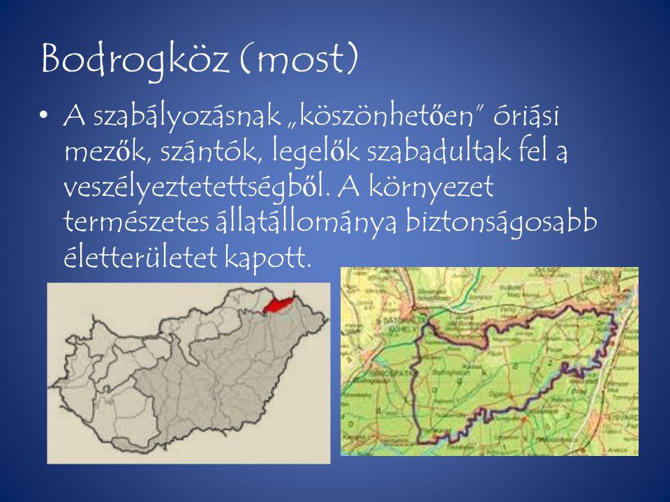 Bodrogköz (régen) • Árpád fejedelem és emberei annak idején ezt a területet szállták meg el ő ször.
