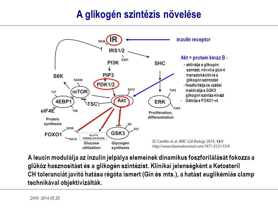 A glikogén szintézis növelése A leucin modulálja az inzulin jelpálya elemeinek dinamikus foszforilálását fokozza a glükóz hasznosítást és a glikogén szintézist.
