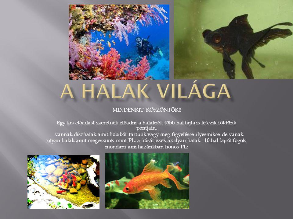 MINDENKIT KÖSZÖNTÖK!.Egy kis előadást szeretnék előadni a halakról.