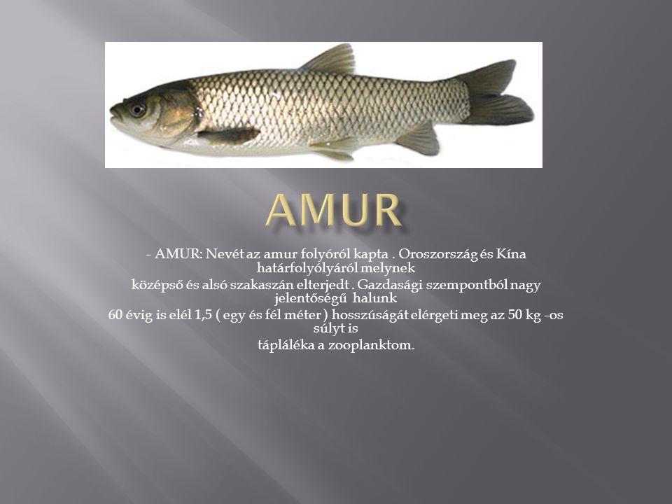 - AMUR: Nevét az amur folyóról kapta.
