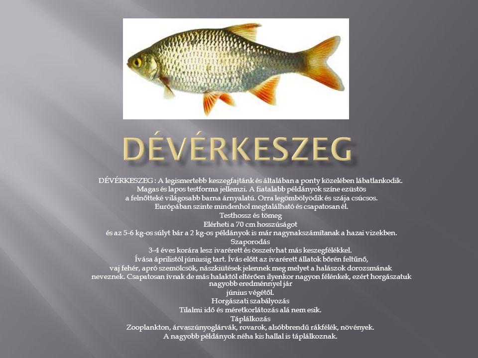 - MÁRNA: Nyílthólyagu halak rendjének pontyfélék családjába tartozó halnem.
