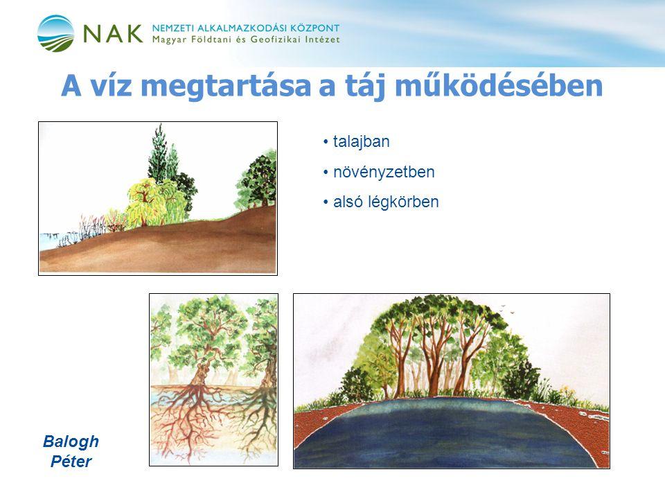 A víz megtartása a táj működésében • talajban • növényzetben • alsó légkörben Balogh Péter