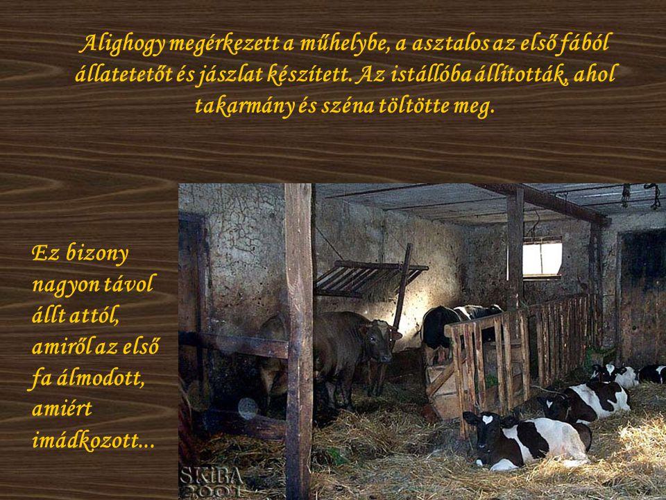 Alighogy megérkezett a műhelybe, a asztalos az első fából állatetetőt és jászlat készített. Az istállóba állították, ahol takarmány és széna töltötte