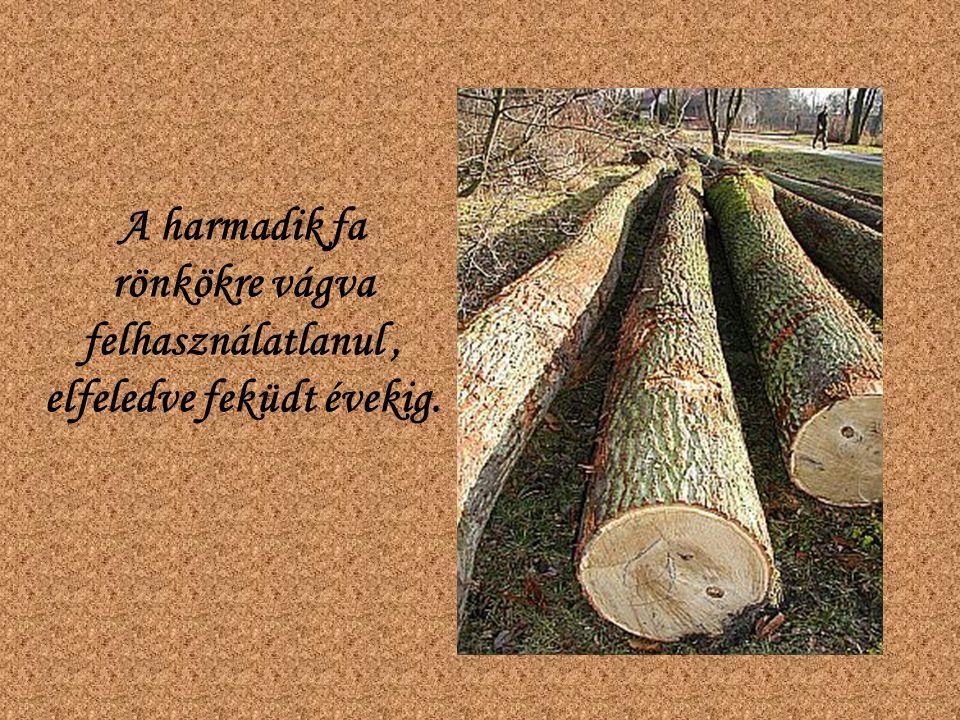 A harmadik fa rönkökre vágva felhasználatlanul, elfeledve feküdt évekig.