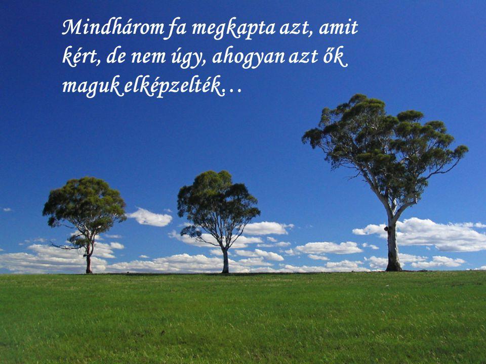 Mindhárom fa megkapta azt, amit kért, de nem úgy, ahogyan azt ők maguk elképzelték…