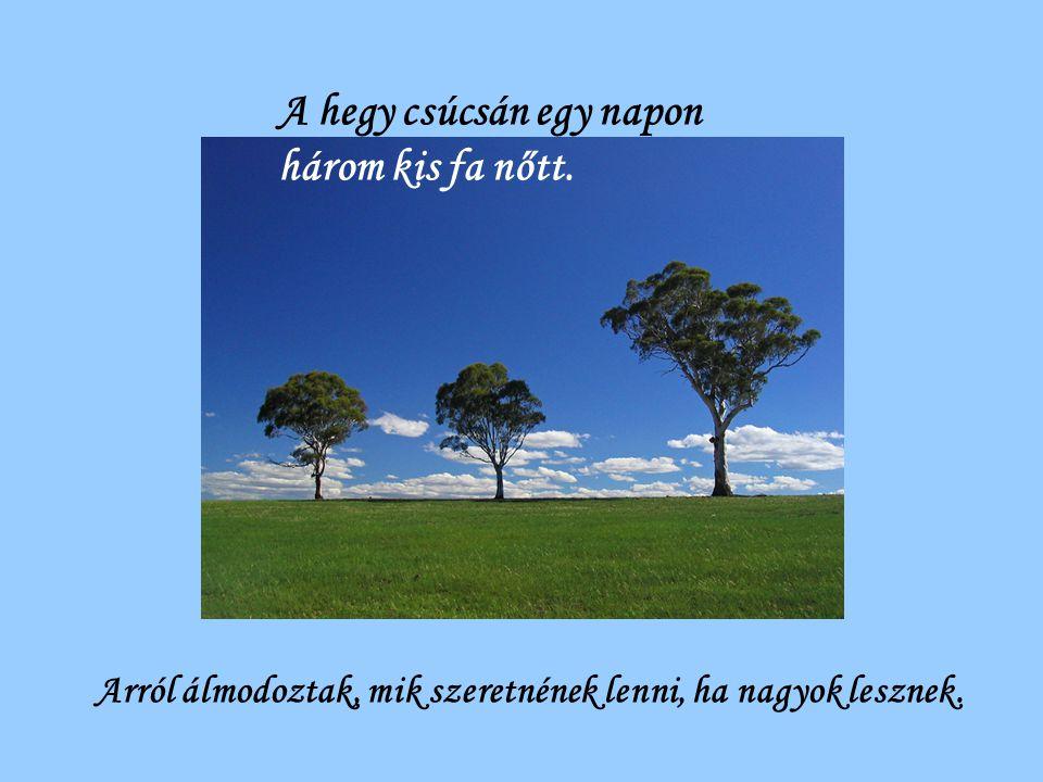 A hegy csúcsán egy napon három kis fa nőtt. Arról álmodoztak, mik szeretnének lenni, ha nagyok lesznek.