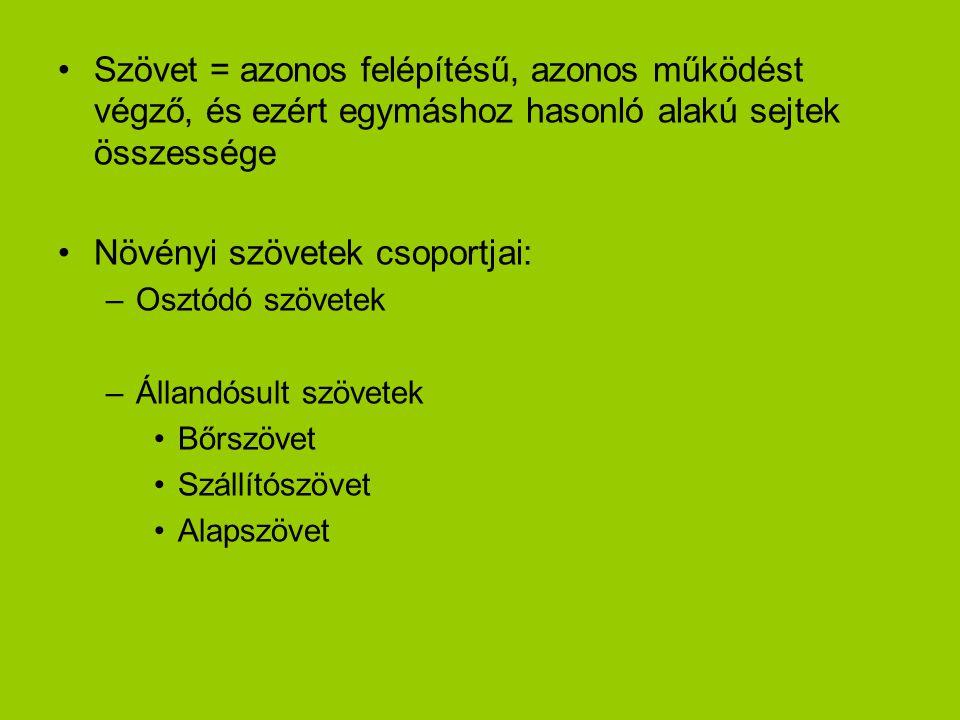 •Szövet = azonos felépítésű, azonos működést végző, és ezért egymáshoz hasonló alakú sejtek összessége •Növényi szövetek csoportjai: –Osztódó szövetek