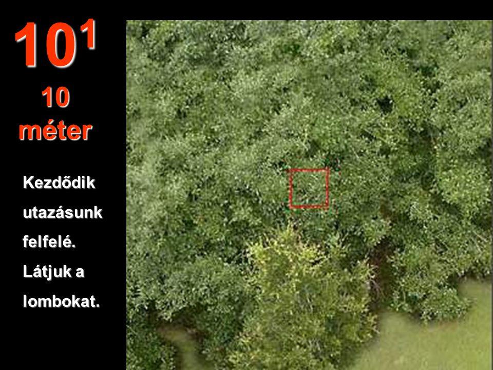 Ebből a távolságból egy bokor leveleiismerhetőkfel a kertben. 10 0 1 méter