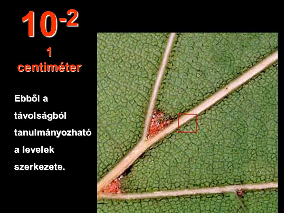 10 cm-es távolságbankörvonalazódnak a levelek. 10 -1 10 centiméter
