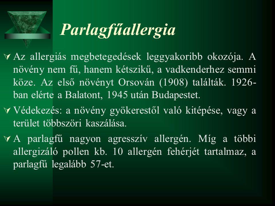 Parlagfűallergia  Az allergiás megbetegedések leggyakoribb okozója. A növény nem fű, hanem kétszikű, a vadkenderhez semmi köze. Az első növényt Orsov