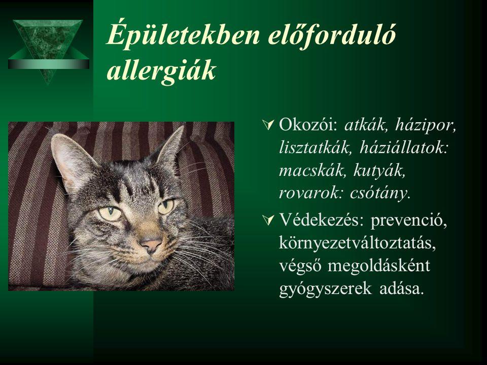 Épületekben előforduló allergiák  Okozói: atkák, házipor, lisztatkák, háziállatok: macskák, kutyák, rovarok: csótány.  Védekezés: prevenció, környez