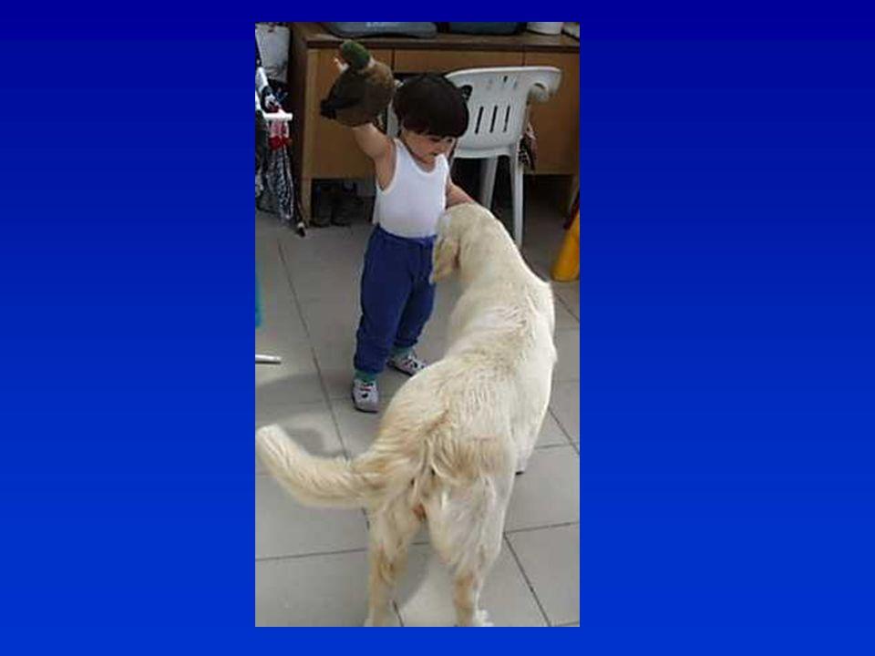 Nem kell minden kutyának tenyészthetőnek lennie  Tenyészthető – megfelel a tenyésztési szabályzat követelményeinek (csak kevés ember akar tenyészteni – és nem kell annyit tenyészteni!)  Nem tenyészthető, de jó munkára – egészséget nem befolyásoló hiba: pld.